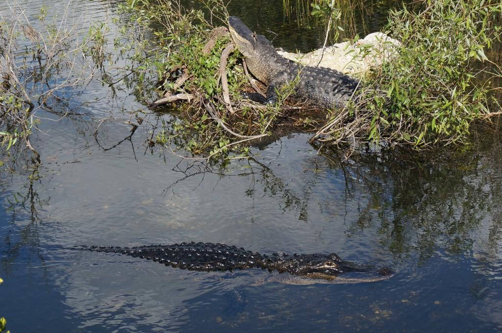 Everglades Floride