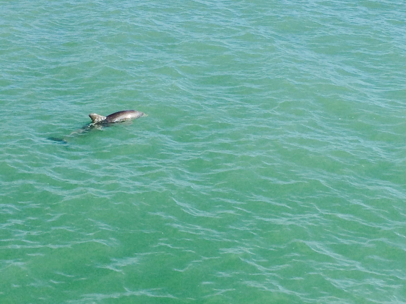 Naples dauphins
