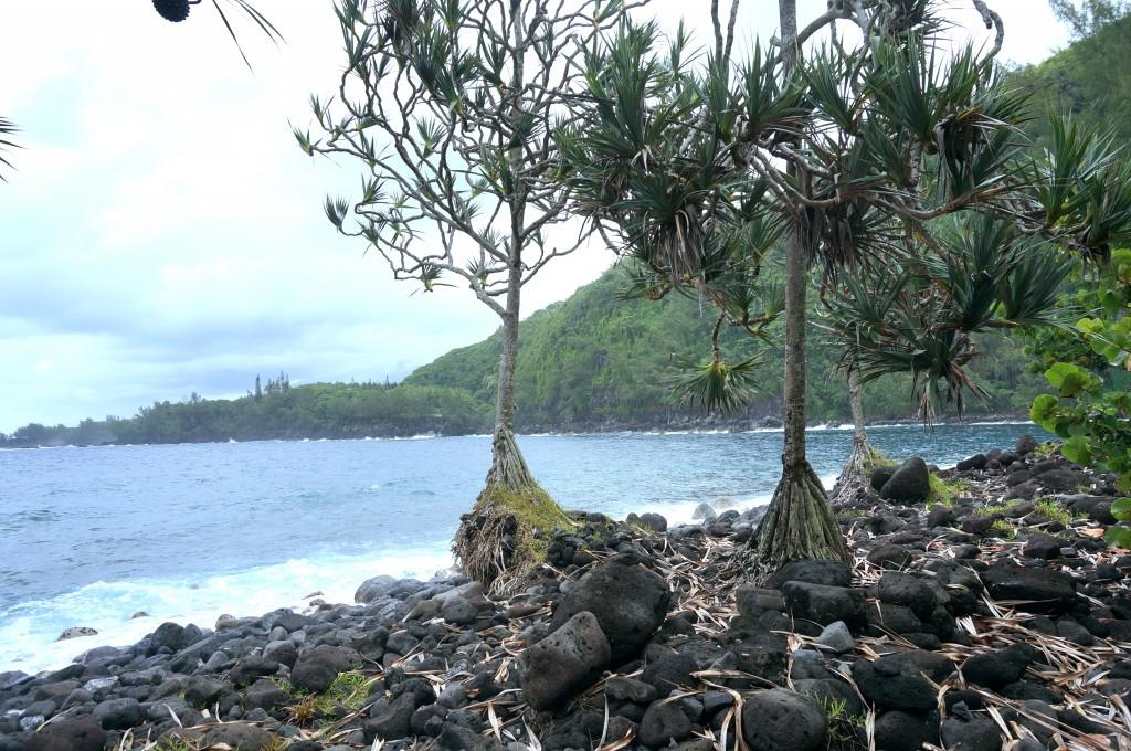 Anse des cascades Réunion
