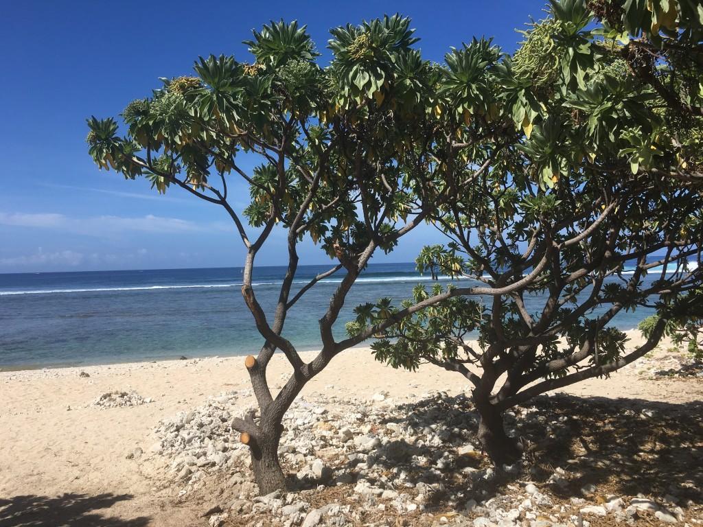 Plage La salinen Réunion