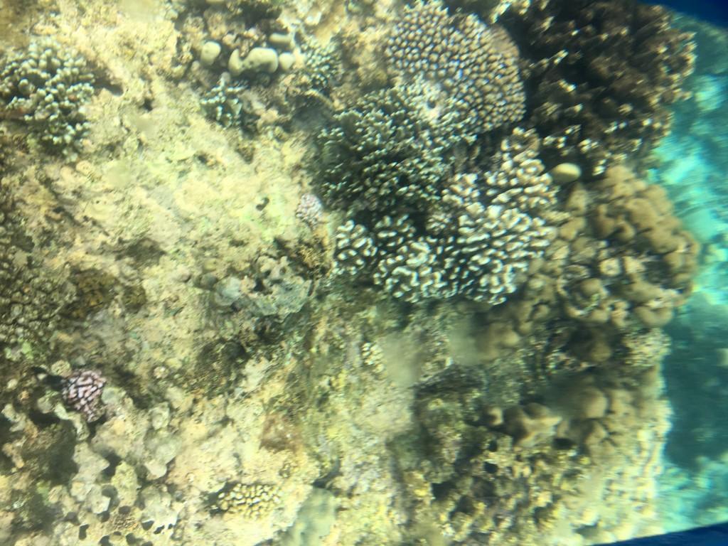 Snorkeling Ile Maurice